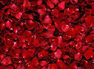 火红玫瑰浪漫风景唯美壁纸
