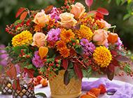 盆栽大丽花图片漂亮迷人
