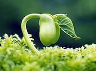 清新的绿色植物素材作品