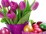 复活节的彩蛋与郁金香图片