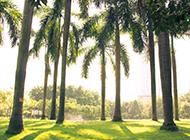 福建棕櫚樹圖片壁紙精選