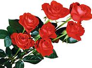 情人节的大束红玫瑰图片