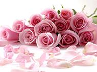 粉玫瑰花束图片高清精美