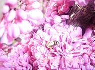 阳光下的粉色花朵摄影图片