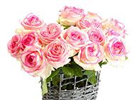 常見的花卉粉色玫瑰植物圖片素材