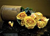 黄玫瑰花束图片娇柔美丽