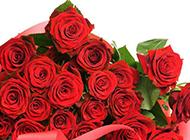 浪漫情人节丝带红玫瑰素材