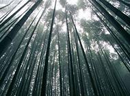 绿色竹林植物图片高清特写