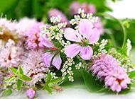 鲜花背景素材下载