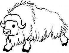 野牦牛简笔画图片