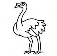 幼儿鸵鸟简笔画图片大全