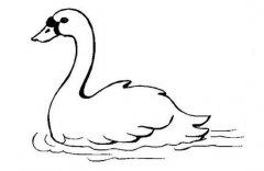 湖里的天鹅简笔画图片