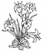 一束美丽的百合花简笔画图片