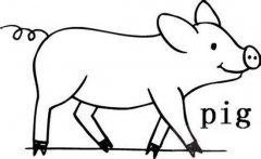 动物简笔画:猪