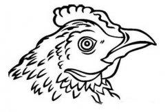 母鸡头像简笔画图片