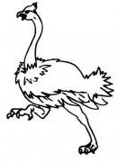 儿童关于奔跑的鸵鸟简笔画图片