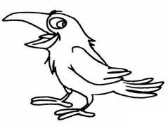 儿童动物简笔画图片:啼叫的乌鸦