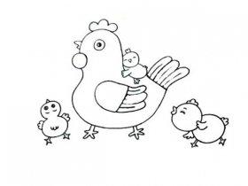 母鸡带小鸡简笔画