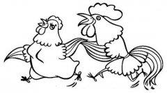 可爱的公鸡与母鸡简笔画图片