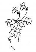 牵牛花藤蔓简笔画图片