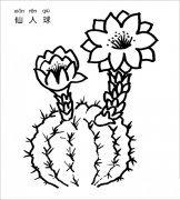 仙人球简笔画图片