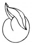 幼儿园关于桃子的简笔画