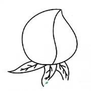 水蜜桃简笔画图片