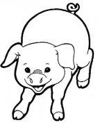 关于猪的简笔画