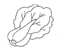 幼儿简笔画:大白菜