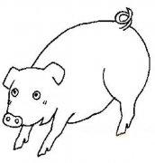 儿童关于猪的简笔画