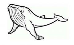 黑白的鲸鱼简笔画图片