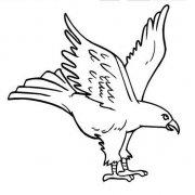动物简笔画图片:老鹰