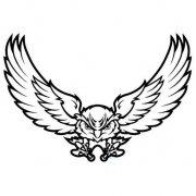 天上飞翔的老鹰正面简笔画