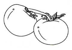 儿童简笔画:两个番茄