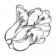 儿童简笔画:白菜