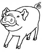 儿童简笔画:猪
