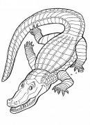 动物简笔画大全:凶恶的鳄鱼