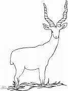 动物简笔画:羊