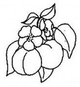 树上的桃子简笔画图片大全