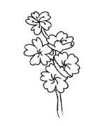 朵朵梅花简笔画