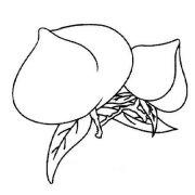 小学生关于桃子的简笔画图片