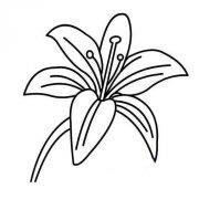 一朵漂亮的百合花简笔画图片