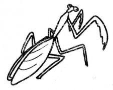 小学生关于螳螂的简笔画图片