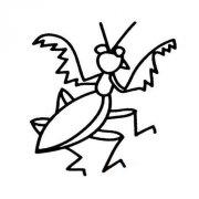 幼儿螳螂简笔画图片大全