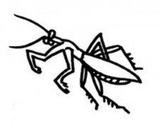 幼儿昆虫简笔画大全:螳螂