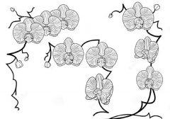 蝴蝶兰简笔画素材图片