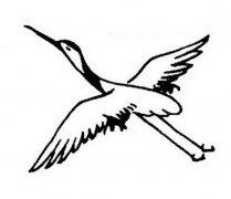 空中飞翔的丹顶鹤简笔画图片