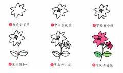 百合花简笔画教程步骤图片:怎么画百合花