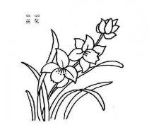 儿童简笔画花图片:兰花