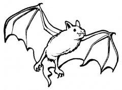 少儿动物简笔画图片:蝙蝠